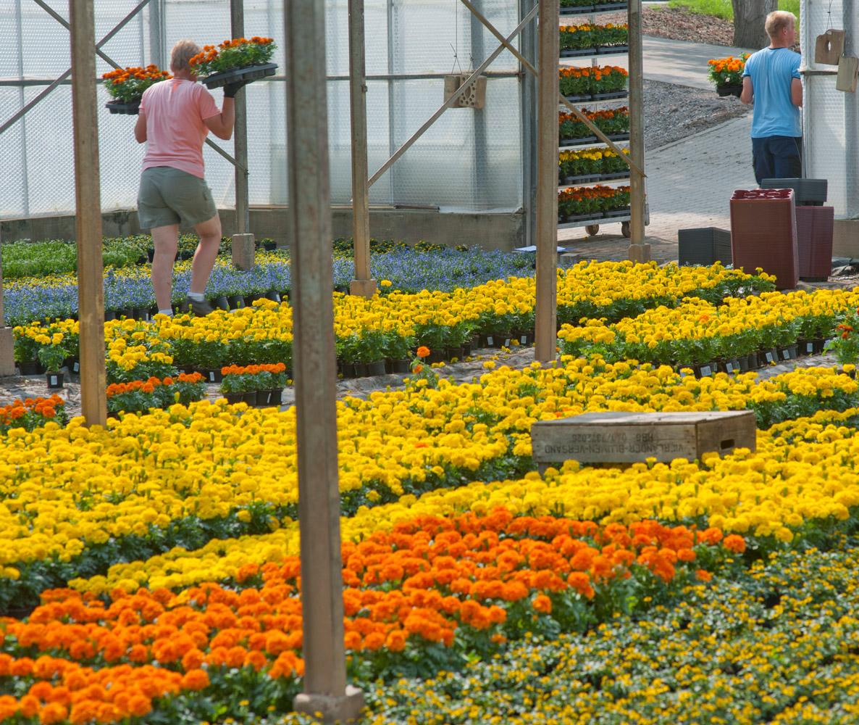 Gemüse wird sowohl  im Gewächshaus  als auch im Freien angebaut