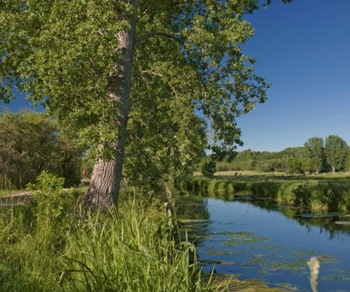 Fluss an dessen Ufer Bäume wachsen